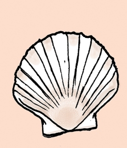 favoured-scallop3-web
